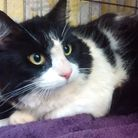 The neutered male cat, named Woody, was underweight and very scared when he was found dumped in a wo