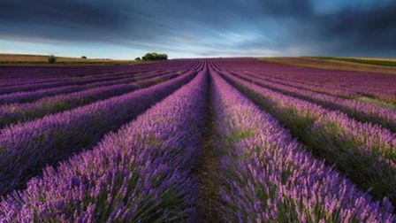 Hitchin Lavender is among the attractions that will be giving away free tickets as part of the Big W