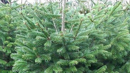 Christmas trees were stolen from Tesco.