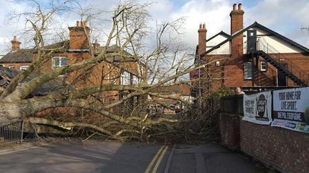 The huge tree which fell down in Drapers Way. Picture: Layth Yousif