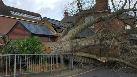 Nobody was hurt by the fallen tree in Drapers Way, Stevenage, but it has damaged railings. Picture: