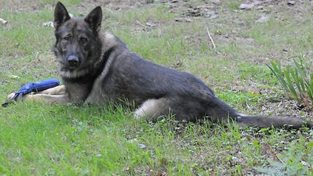 Blue the police dog played a vital role in catching two men from Letchworth who tried to break into