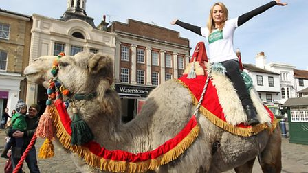 Kokoso the Camel, with Carly O'Brien from Michael Graham Estate Agents in Hitchin
