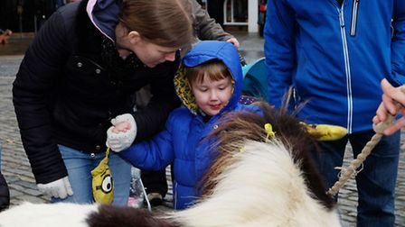 Fairy the Shetland pony meets the public with Marie Curie Cancer fundraisers in Hitchin
