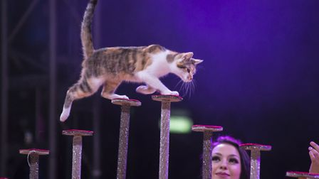 Zippos Circus uses acrobatic cats as part of its act.