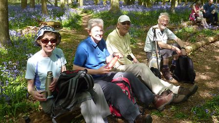 Walkers making a coffee stop amongst the bluebells in Combs Wood close to Benington.