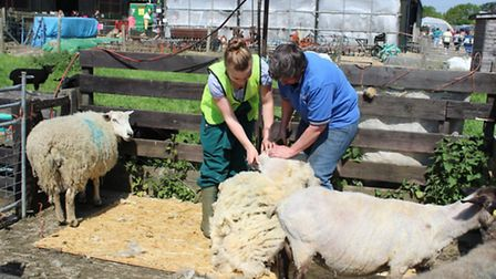 The annual School Farm Open Day and Plant Sale took place at Stratton Upper School on Sunday.