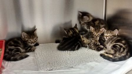 The kittens were found on the steps of a vets surgery in Stevenage