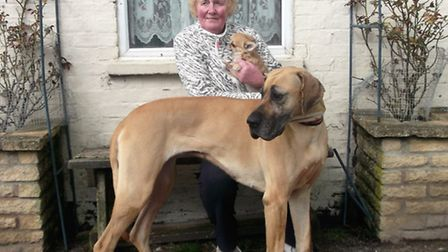 Sheila Cooper, pictured with her Great Dane and chihuahua, is marking 50 years at Hare Park Cottage
