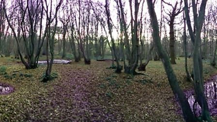 The former site of a Medieval house in Whomerley Wood