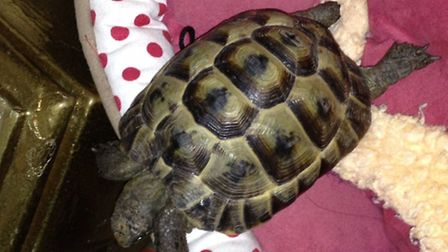 Have you seen Edgar? The tortoise is believed to have been stolen from a Stevenage garden.