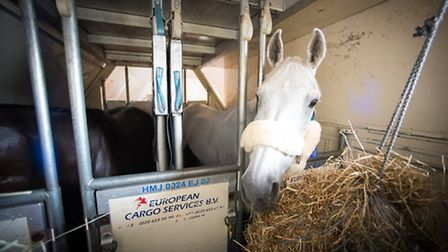 Olympic horses depart Stansted, Pic: Jon Stroud