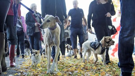 Dog owners came together with their pets last year to raise 1,100 for the Herts Air Ambulance.