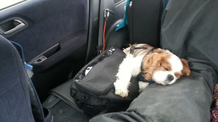 Simon's dog helped keep him company in the support car...