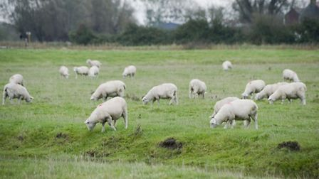 The police have said it is vital to have a dog on a lead around livestock, even if you can usually t