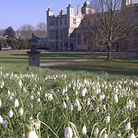 Snowdrops at Audley End