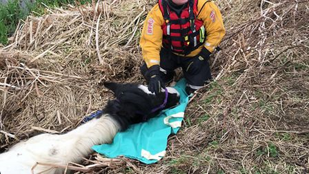 Kempston firefighters – who are trained to rescue large animals – led the operation to save a horse