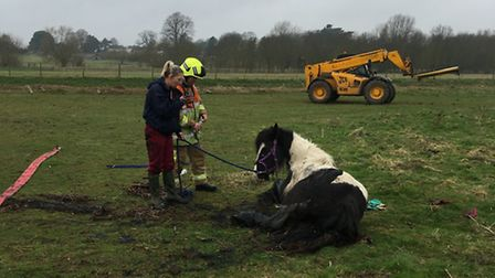 A number of parties were involved in the horse rescue operation, including Sandy firm Copart which a