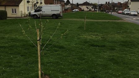 Trees have been planted by a 'mystery gardener' on Letchmore Green in Stevenage. Picture: Louise McE