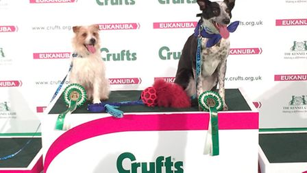 Jack Russell Olly stole the show at this year's Crufts.