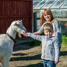 Lucie and Alfie Anderton feeding goats. Photo: Saffron Photo.