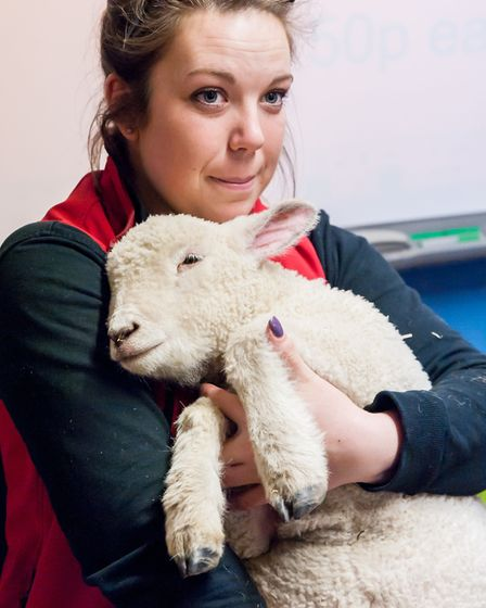 Xena, the rejected lamb who has been brought up by humans and thinks she's a dog. Photo: Saffron Pho