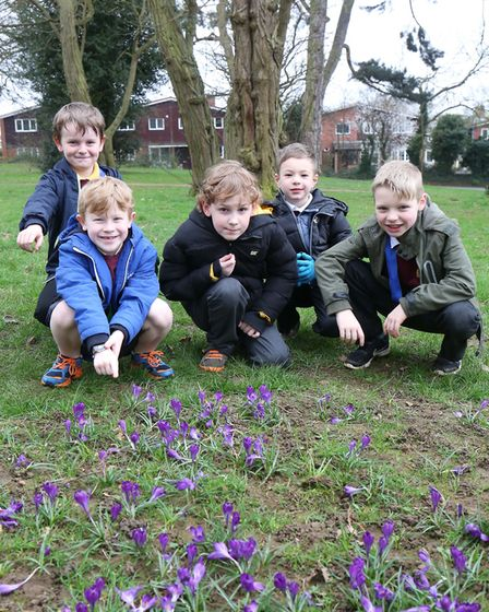 Pupils from Longmeadow school with the crocuses they planted as part of the End Polio Now campaign i