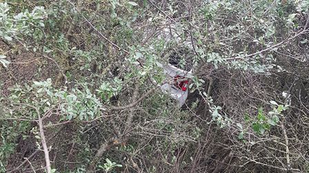 The car can just be seen through the bushes after crashing on Arlesey Road in Ickleford. Picture: @H