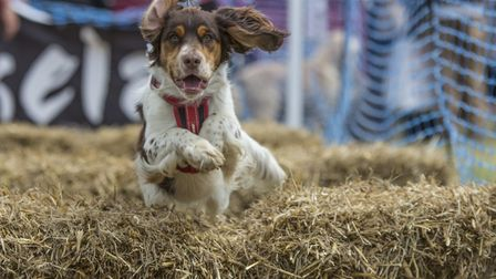 DogFest offers a huge range of activities for dogs..and their owners.