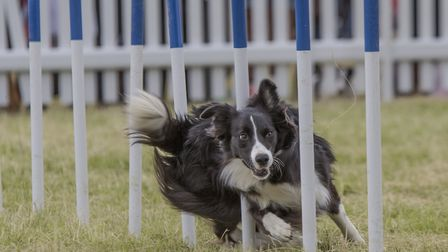 Slalum racing will be just one of the activities on offer at DogFest next weekend.