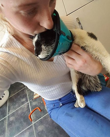 Leanne Lewis is devastated her beloved cat Luna has been doused in motor oil and thrown against a br