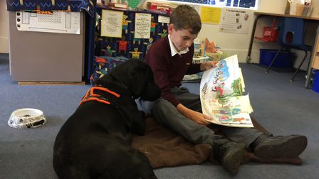 Toby Tanswell, 11, reading with Teasel.