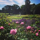 The gardens at Audley End House. Picture: ALAN NORTH/ENGLISH HERITAGE