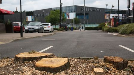 Some trees were cut down next to the Broadhall Way roundabout looking towards Debenhams.
