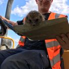 Jamie Taylor, of South Midlands Plant Ltd, with a hedgehog at The Limes, Radwinter. Picture: ENTERPR