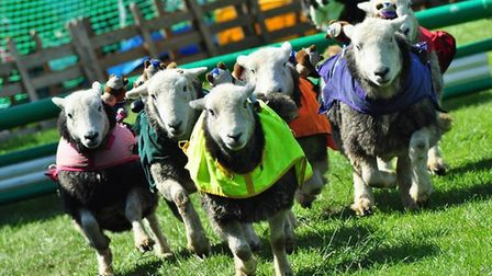 The 'lamb national' is to take place at this year's Ashwell Show.