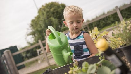 Six-year-old Tommy King watering the strawberries. Picture: Aragon