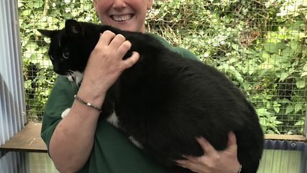 Sergeant Harry Tubbs weighs 9.9kg, twice the average weight for a cat. Picture: RSPCA