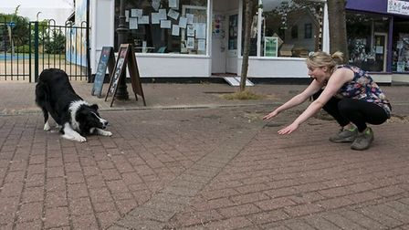 Garden City Brewery is hosting a dog show in aid of the Zante Strays charity. Picture: Paul Louis Ar
