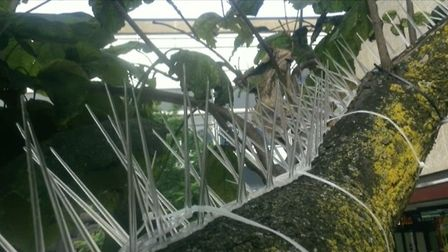 Anti-pigeon spikes have been installed in Stevenage town centre by the borough council.