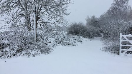 Snow in Thunderley, Wimbish. Picture: SARAH HORNBY
