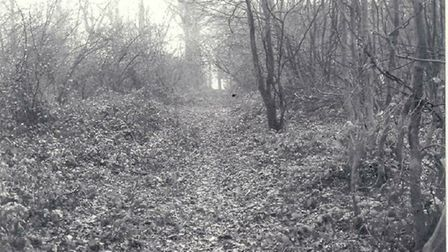 The Whitwell woodland where Anne Noblett's body was found. Picture: Herts Police