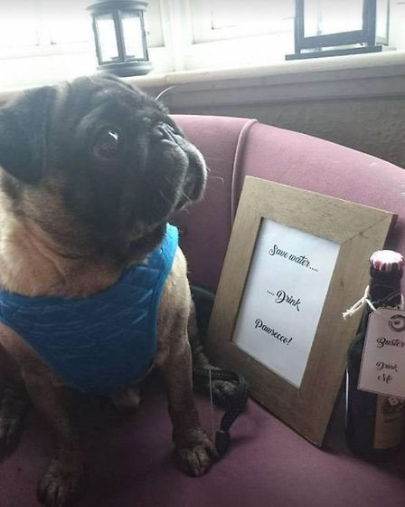 The Pugs and Pawsecco party at the George and Dragon in Graveley proved popular.