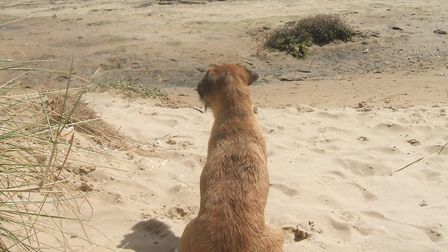 Milo on a normal day at the beach. Picture: Courtesy of Berry House Veterinary Practice