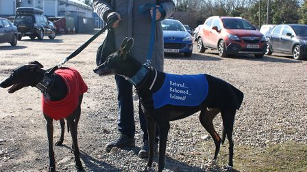 Two retired greyhounds brought along to the pro-racing demonstration at Henlow Stadium last week. Pi