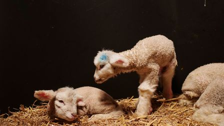 Rob Hodgkins has started using technology to stop lamb mortalities. Picture: Hayden West