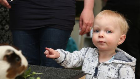 Children and parents meet some animals at the Shefford and District Children's Centre 10th birthday