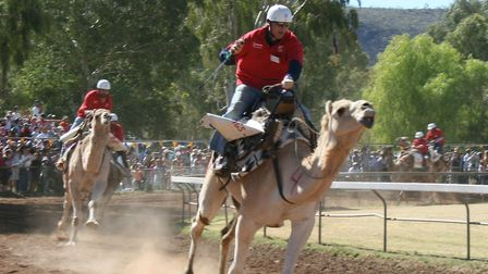 Camel racing during the 2009 Camel Cup in Alice Springs, Australia. Picture: Toby Hudson via Wikimed