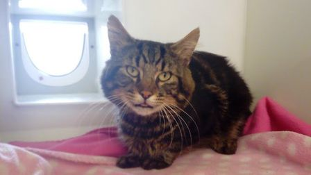 The RSPCA are struggling to find Ford's owners as he is not microchipped. Picture: RSPCA