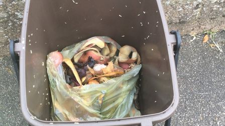 Janet Anderson's unemptied food caddy in Hitchin, crawling with maggots again after being cleared. P